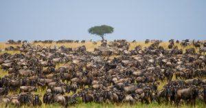masai mara safari banner