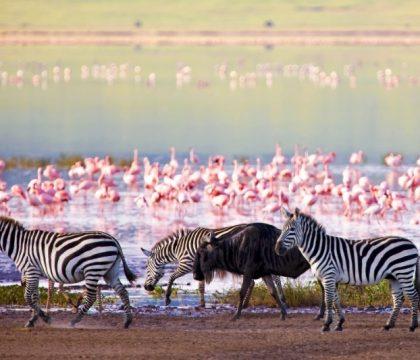 lake manyara safari tanzania
