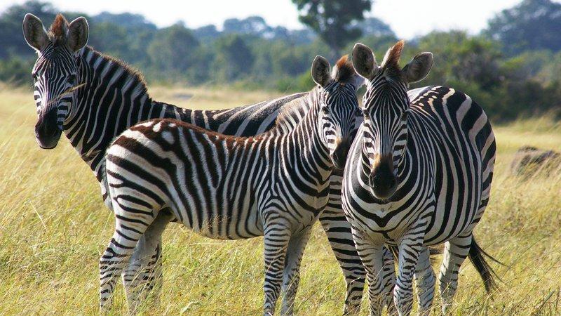 zambia safaris 3 days