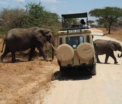 4 days Tanzania safari