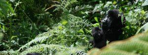 Rwanda gorilla tours akagera