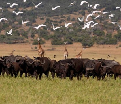 3 days akagera safari rwanda