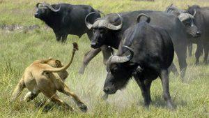 big five safaris Tanzania