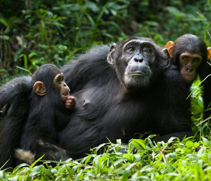uganda rwanda