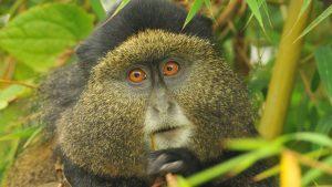 3 days rwanda safari