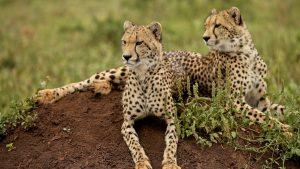 Kafue Safari