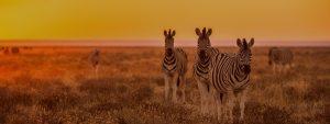 Kafue Safaris Zambia