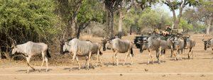 3 days Zambia Safari