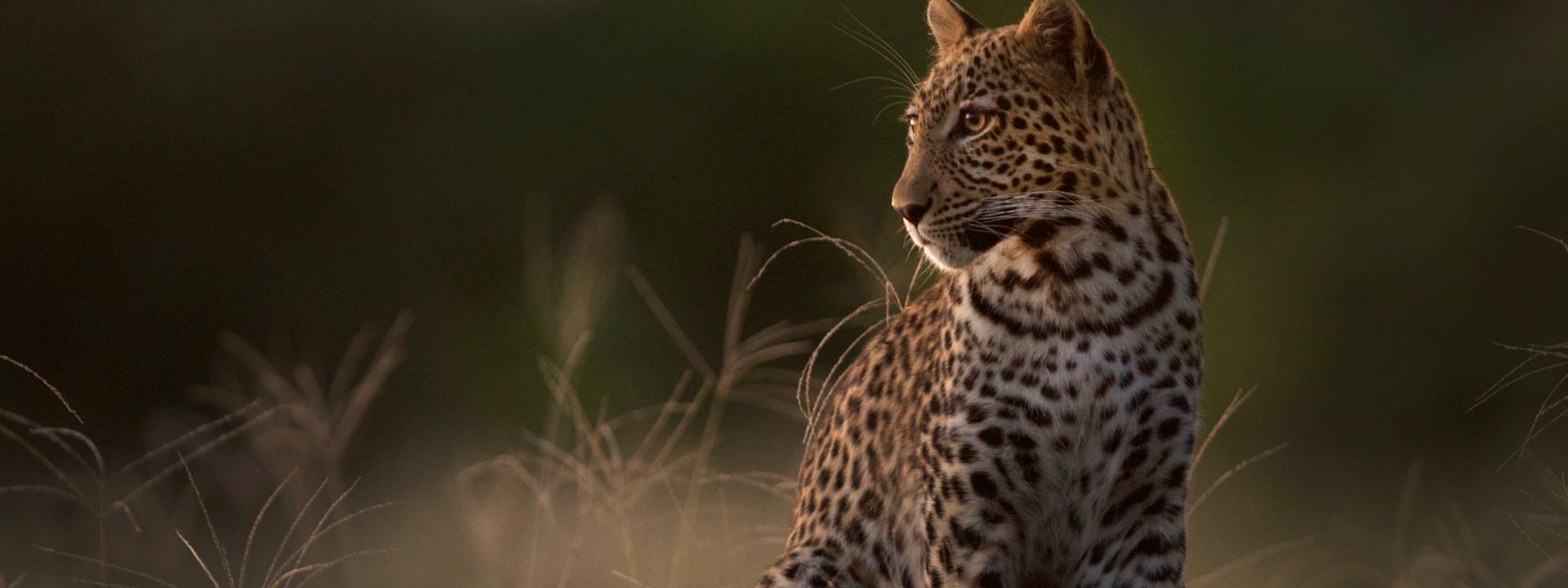 kasanka safari
