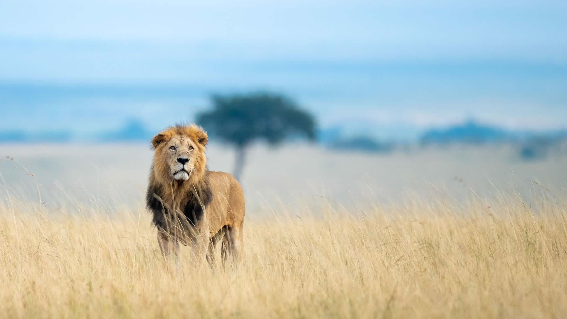 Kenya Tanzania Safari