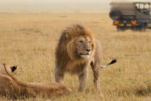 Kenya tanzania Uganda Safari