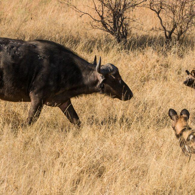 7 Days Zambia Safaris
