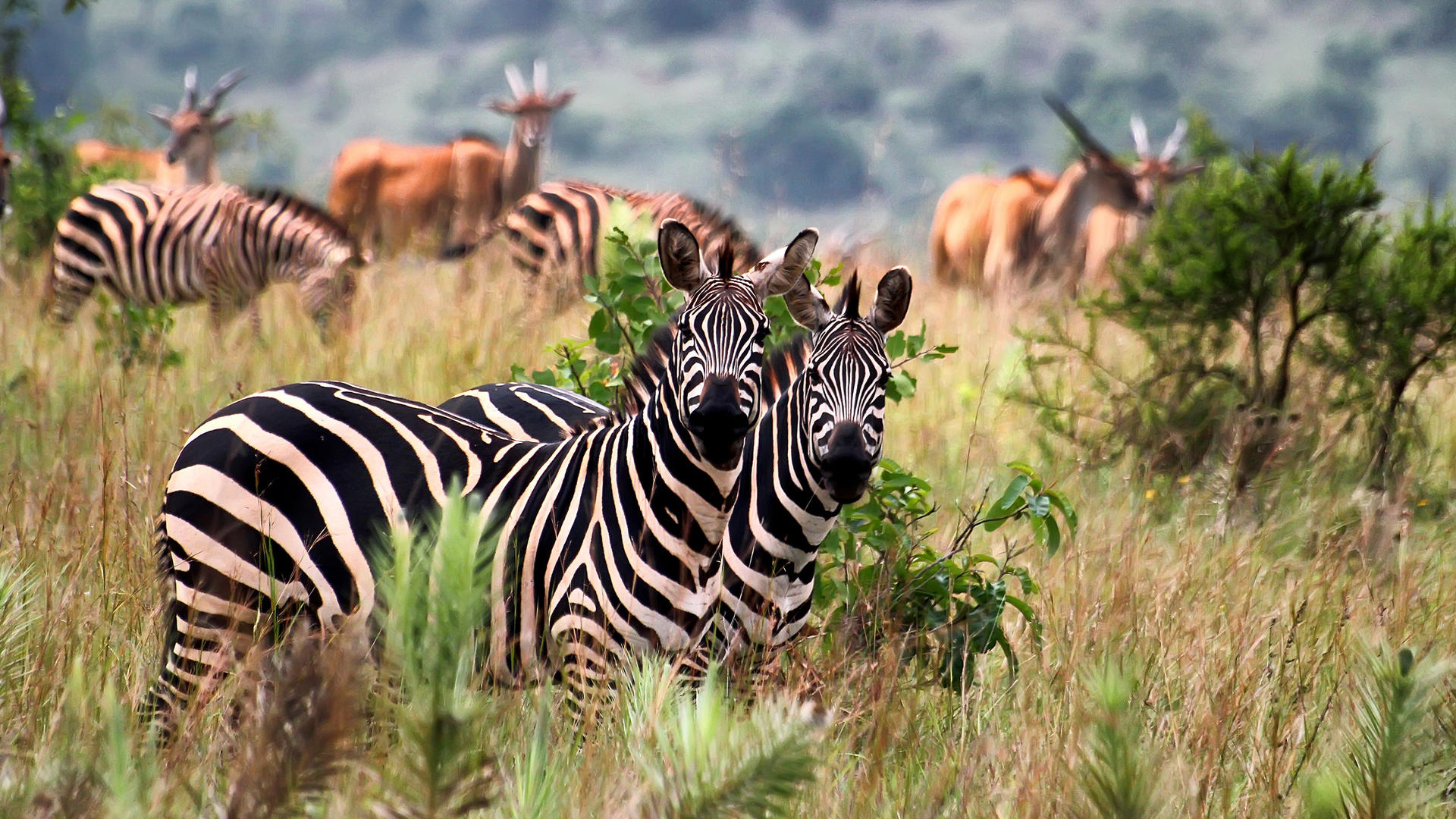 Akagera Safaris