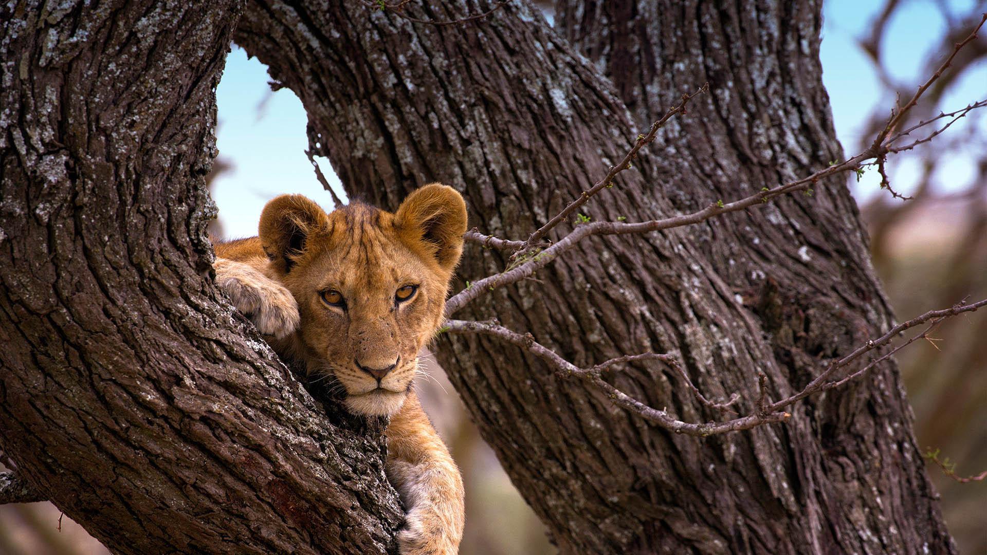 8 days Tanzania safari and Zanzibar