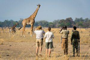 South lwangwa Zambia Safari