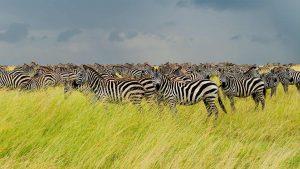 Tanzania luxury safaris