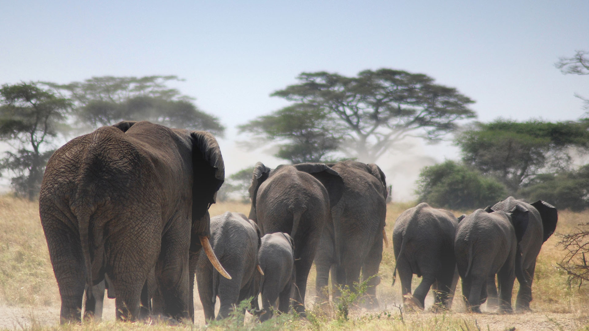 3 days Tanzania safari