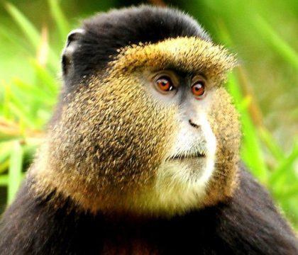3 days rwanda gorilla tours