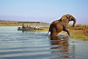 Lower Zambezi Safari