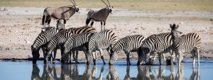 Zambia Tanzania Safari