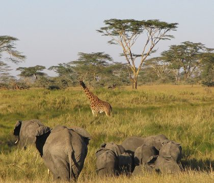 Zambia Tanzania safaris