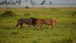 Masai mara Safari 3 Days